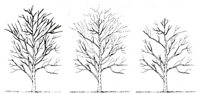 Crown Reduction Illustration