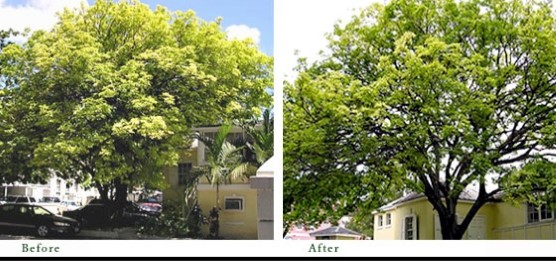 Tallahassee Tree Pruning Services