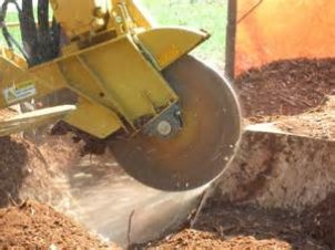 Tallahassee, Florida Stump Grinding Services