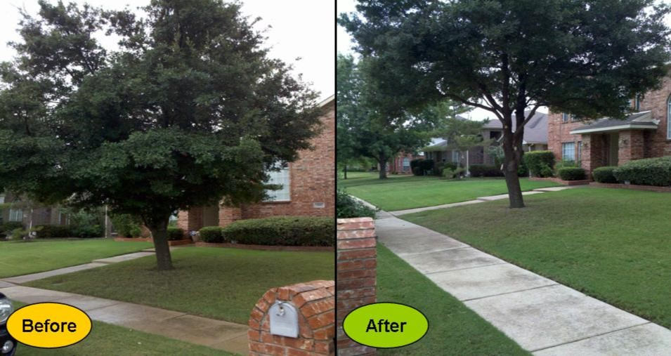After Tree Pruning