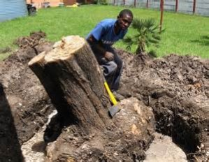 Other Stump Removal Methods