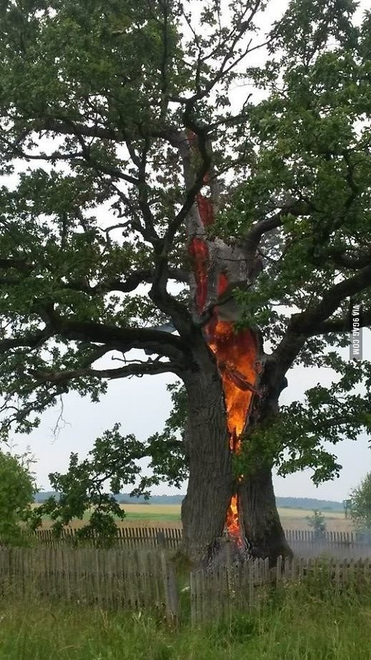 Tree on Fire From Lightning Strike