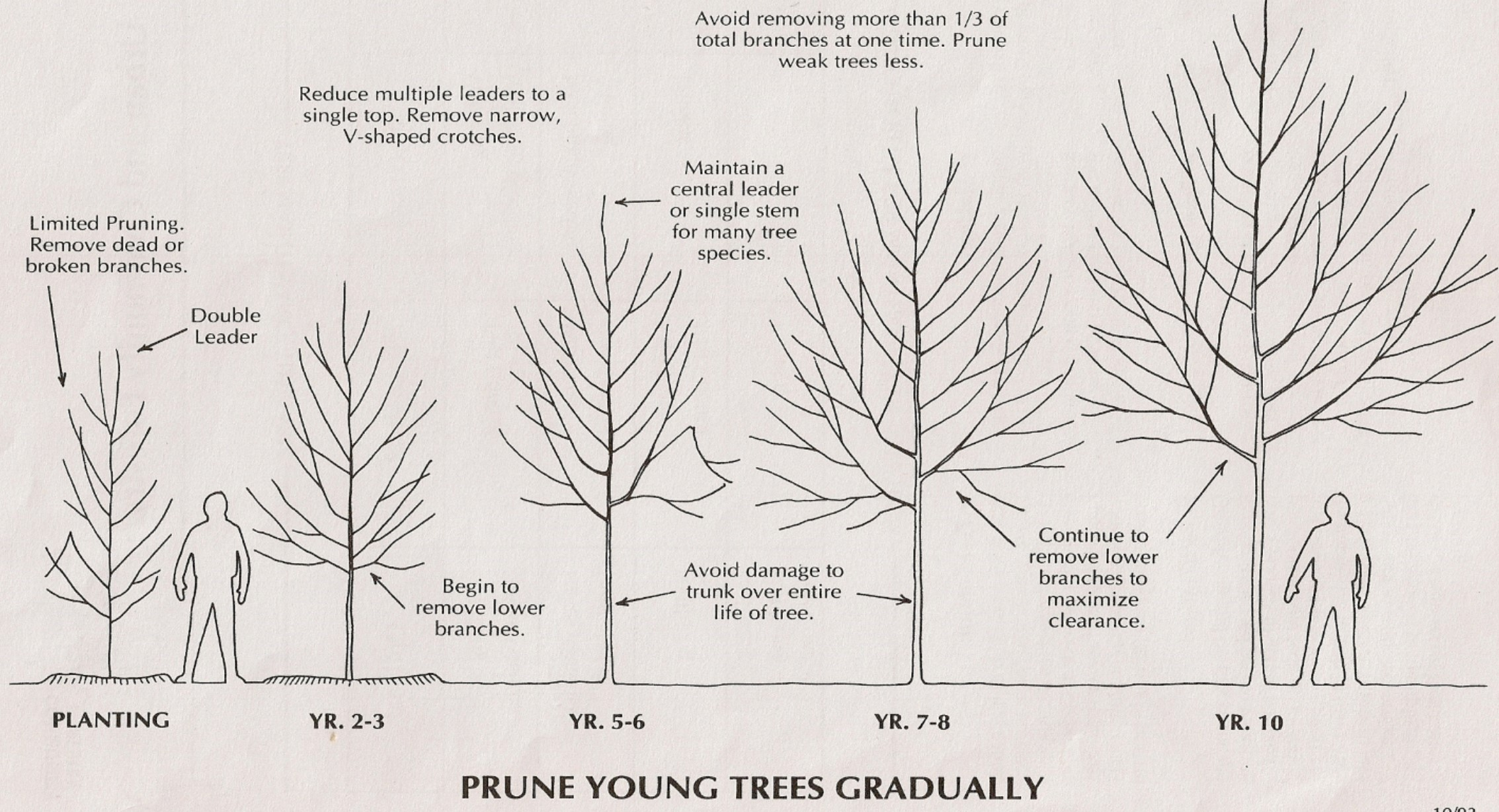 Complete And Proper Tree Pruning Practices To Keep In Mind
