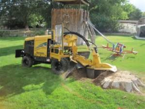 Stump Removal Services Tallahassee