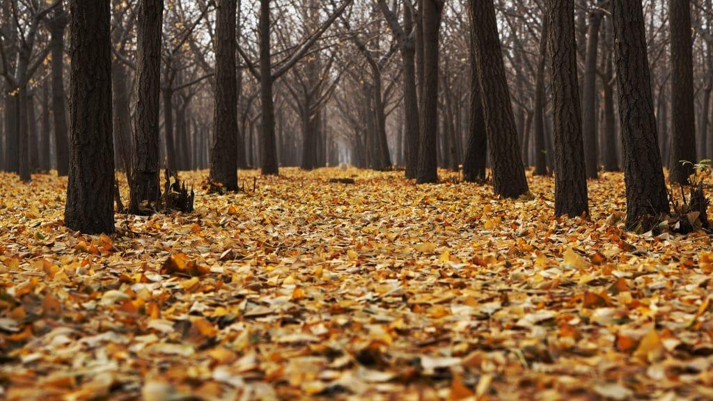 Soil Nutrient Management - Fielder Tree Services (850) 656-8737